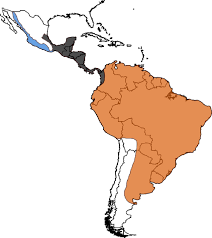 Mexico Central America And South America Map by Phylogeographic And Population Genetic Analyses Reveal Multiple