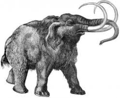 woolly mammoth genome sequenced sciencedaily
