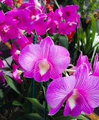 Hilo Flowers - 109 best flowers images on pinterest orchids flowers and hawaii