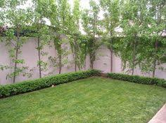 capital ornamental pear pear trees tree forest and pear