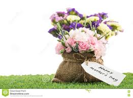mothers day flower with blooming carnation flowers stock photo