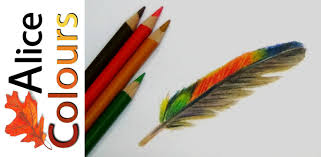 how to draw a feather in colored pencils youtube