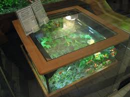 fish tank coffee table diy coffee table aquarium what the pets