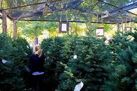 Yucaipa Christmas Lights Live Oak Canyon Christmas Tree Farm Yucaipa Ca California