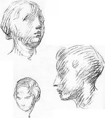 round forms of the head anatomical drawings joshua nava arts