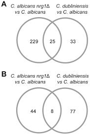 mycose b b si ge global transcriptome sequencing identifies chlamydospore specific