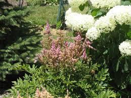 Flowers For Backyard by Landscape Design Specimen Tree Backyard Garden Landscaping