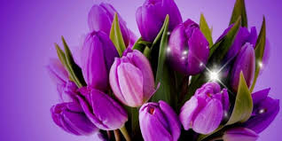Images Of Tulip Flowers - free pictures of tulips flowers clipart