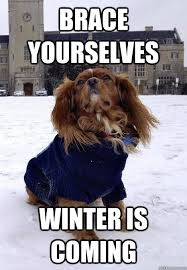 Funny Winter Memes - winter is coming dog memes quickmeme