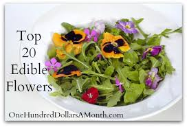 edible flower garnish top 20 edible flowers from garden to kitchen one hundred
