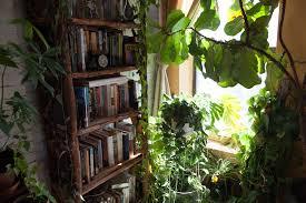 Plants Indoors by Growing Plants Indoors A Beginner U0027s Guide U2014 Homestead Brooklyn