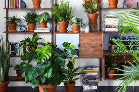 plant delivery xconomy startup bloomscape aims to make houseplant delivery