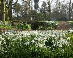 flower places the best snowdrop winter walks in the uk families online