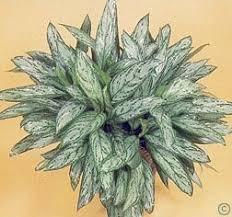 Low Light Indoor Flowers 23 Best Indoor Plants Images On Pinterest Indoor Gardening