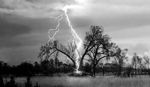 tree explodes after being struck by a terrifying lightning