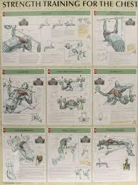 strength training anatomy poster series amazon co uk frederic