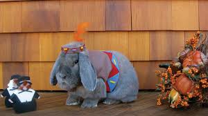 bunny dress up will brighten your day