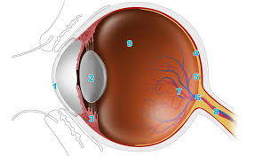 Eye Ducts Anatomy Eye Anatomy An Easy Guide To Your Eye Lenstore Co Uk