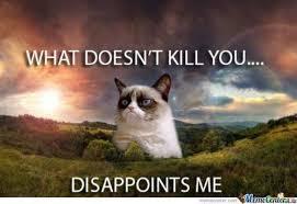 Mad Cat Memes - angry cat meme tumblr funny cute stuff pinterest angry cat