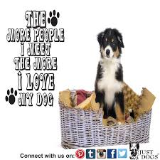 australian shepherd quotes 44 best dog quotes and sayings images on pinterest dog quotes