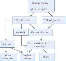 Cell Reproduction Concept Map Answers Pathophysiology Of Diabetic Ketoacidosis Animation