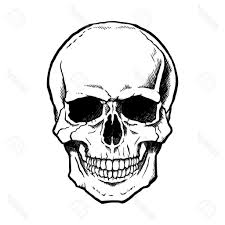 basic skull drawing at getdrawings com free for personal use basic