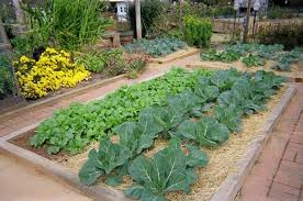 Backyard Vegetable Gardening by Outdoor And Patio Backyard Vegetable Garden In Bricket Boundaries