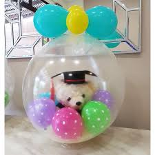 in a balloon gift graduation in balloon gift special gift party display centrepc