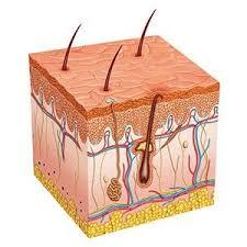 does prids work on ingrown hairs 3 bottles of skin doctors ingrow go ingrown hair lotion 120ml ebay