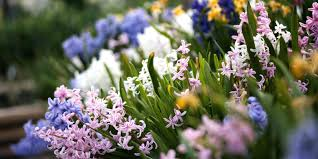 Types Of Flower Gardens Types Of Garden Flowers U2013 Alexstand Club