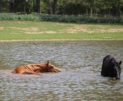 horse protection society of north carolina inc