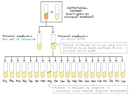 dna replication and rna transcription and translation video