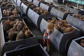Minyak Cpo harga cpo 22 juni minyak menguat sawit cetak rebound market