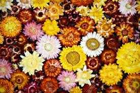 dried flowers background stock photo picture and royalty free