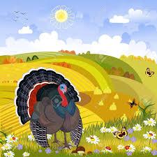lovely turkey in autumn day happy thanksgiving rural