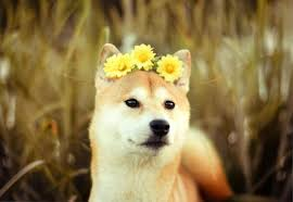 Doge Meme Tumblr - animales adorables tumblr buscar con google cute 3 pinterest