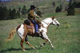 american paint horse association seeks adventurers for ride