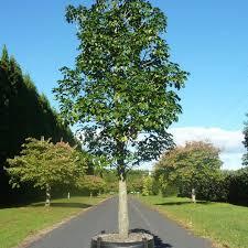 tauranga tree co