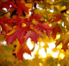 fall choosing plants fall color