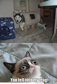 Cat Trap Meme - cat trap by hazzydog meme center