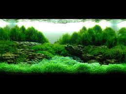 Aquascape Aquarium Designs 3524 Best Aquarium Images On Pinterest Aquascaping Planted
