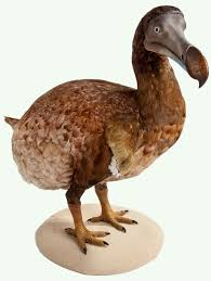 natureplus what u0027s new at the museum tags dodo