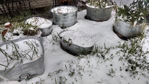 snow anita u0027s arbor