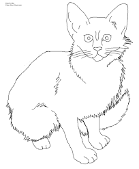 javanese kitten cat coloring page