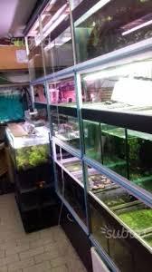 vasche acquario 19 vasche acquario su struttura alluminio animali in vendita a