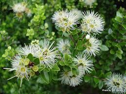 native plants christchurch t e r r a i n taranaki educational resource research analysis