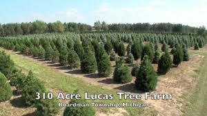 lucas tree farm youtube