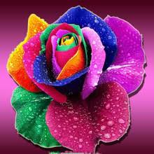 multicolored roses buy multicolored plant and get free shipping on aliexpress