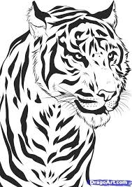 image how to draw a tiger draw tiger 7 1