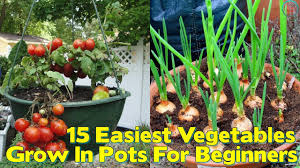 15 easiest vegetables to grow in pots for beginners youtube